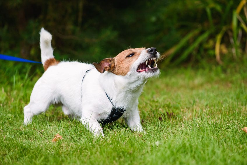 Dealing with Human Aggressive Dogs