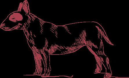 dog-bg-transparent